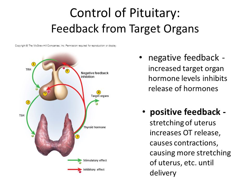 Control of Pituitary: Feedback from Target Organs negative feedback - increased target organ hormone levels inhibits release of hormones positive feedback - stretching of uterus increases OT release, causes contractions, causing more stretching of uterus, etc.
