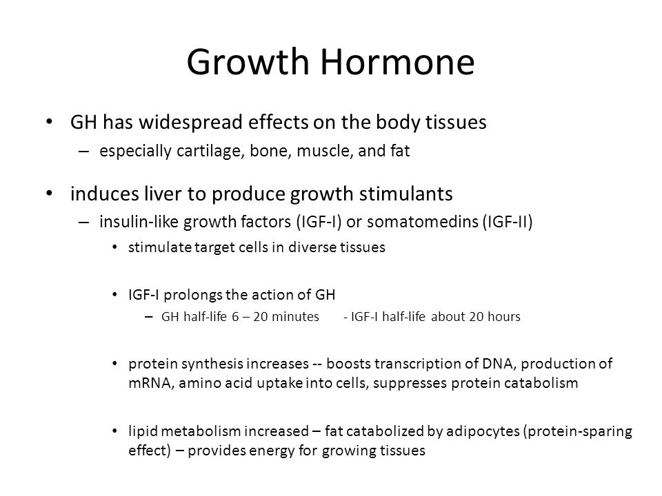 Growth Hormone GH has widespread effects on the body tissues – especially cartilage, bone, muscle, and fat induces liver to produce growth stimulants – insulin-like growth factors (IGF-I) or somatomedins (IGF-II) stimulate target cells in diverse tissues IGF-I prolongs the action of GH – GH half-life 6 – 20 minutes - IGF-I half-life about 20 hours protein synthesis increases -- boosts transcription of DNA, production of mRNA, amino acid uptake into cells, suppresses protein catabolism lipid metabolism increased – fat catabolized by adipocytes (protein-sparing effect) – provides energy for growing tissues