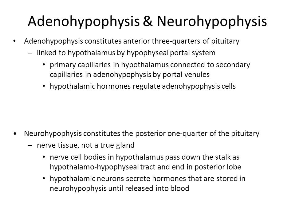 Adenohypophysis & Neurohypophysis Adenohypophysis constitutes anterior three-quarters of pituitary – linked to hypothalamus by hypophyseal portal system primary capillaries in hypothalamus connected to secondary capillaries in adenohypophysis by portal venules hypothalamic hormones regulate adenohypophysis cells Neurohypophysis constitutes the posterior one-quarter of the pituitary – nerve tissue, not a true gland nerve cell bodies in hypothalamus pass down the stalk as hypothalamo-hypophyseal tract and end in posterior lobe hypothalamic neurons secrete hormones that are stored in neurohypophysis until released into blood
