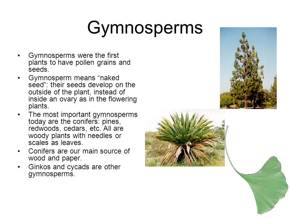 Angiosperms Angiosperms are flowering plants.Most of the plants we see are angiosperms.
