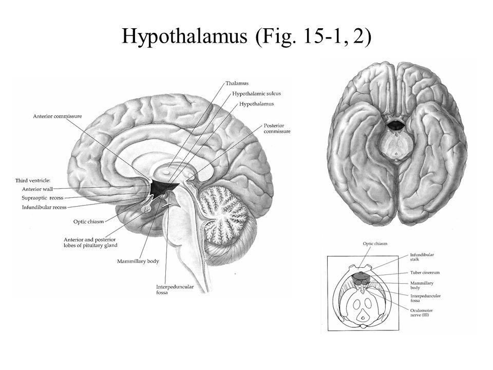 Hypothalamus (Fig. 15-1, 2)