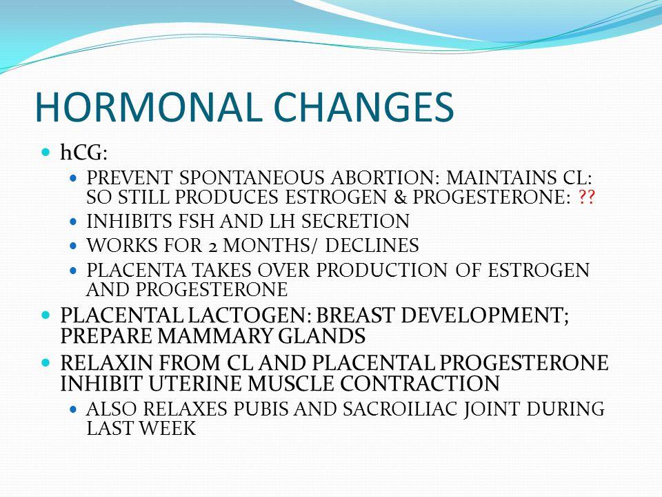 HORMONAL CHANGES hCG: PREVENT SPONTANEOUS ABORTION: MAINTAINS CL: SO STILL PRODUCES ESTROGEN & PROGESTERONE: ?? INHIBITS FSH AND LH SECRETION WORKS FO