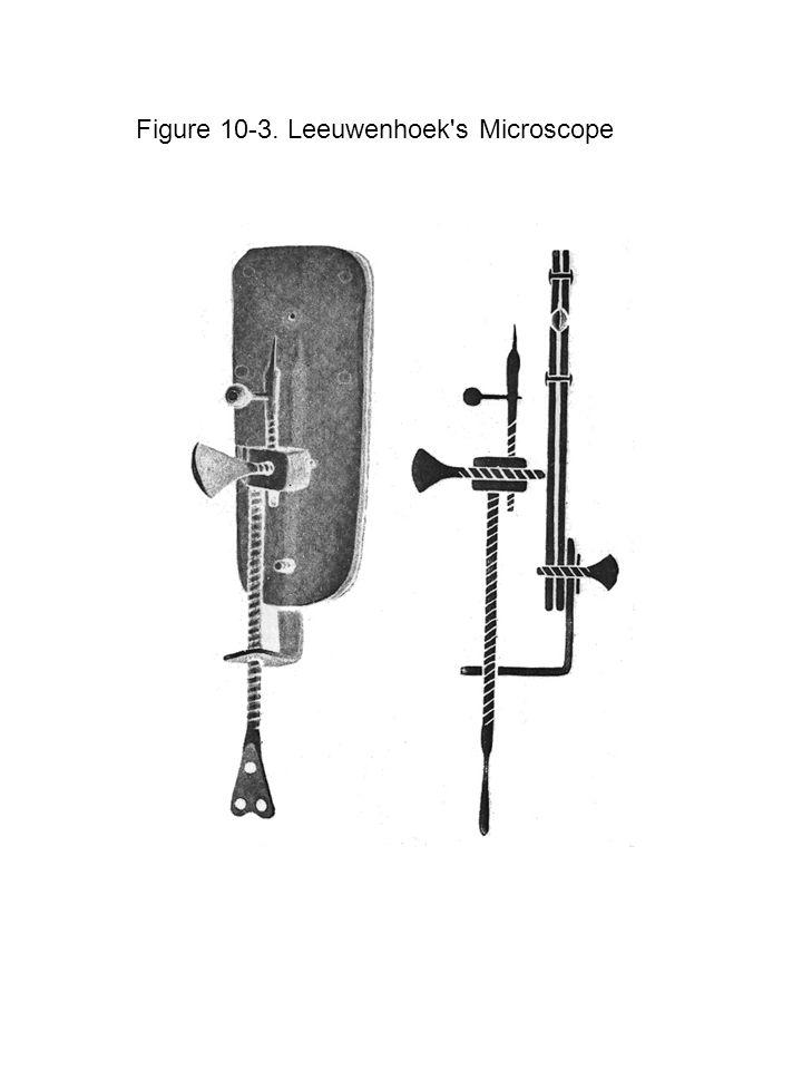 Figure 10 ‑ 33. Arcella, a Testate Amoeba