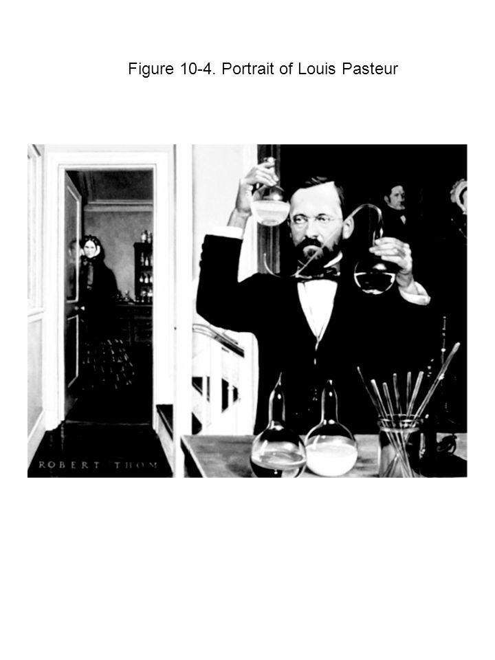 Figure 10 ‑ 5. Pasteur s Swan-Neck Biological Flasks