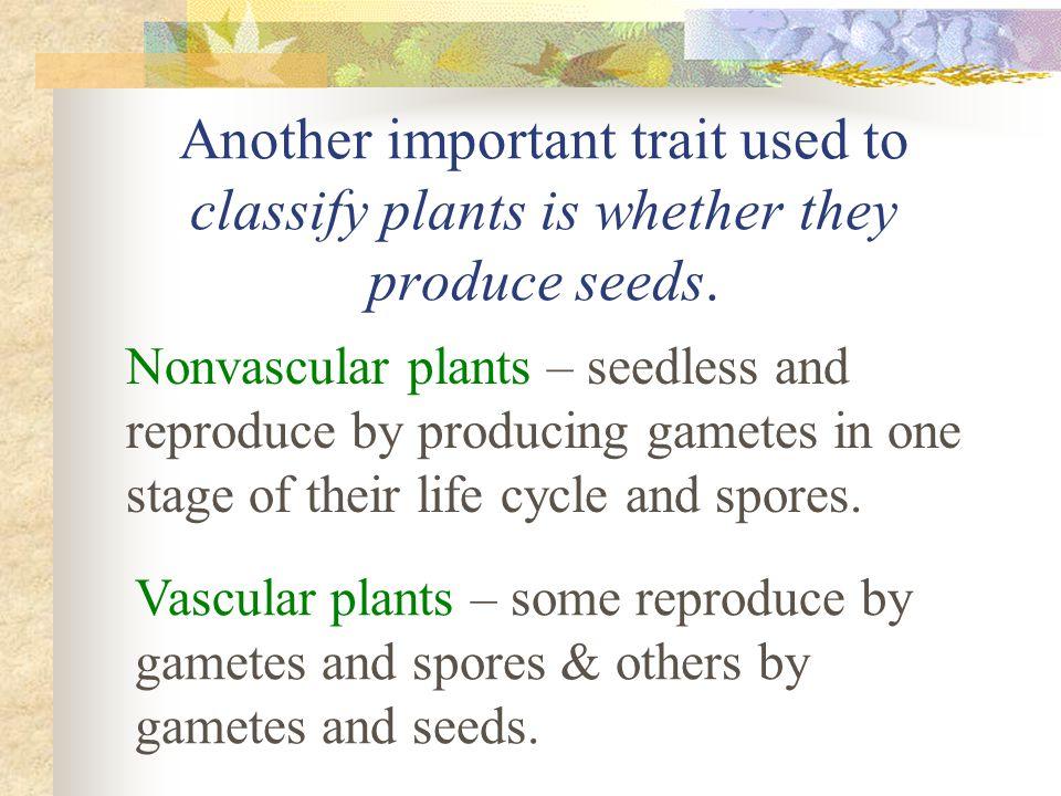 Phylum Pterophyta Vascular Plants Without Seeds Ferns