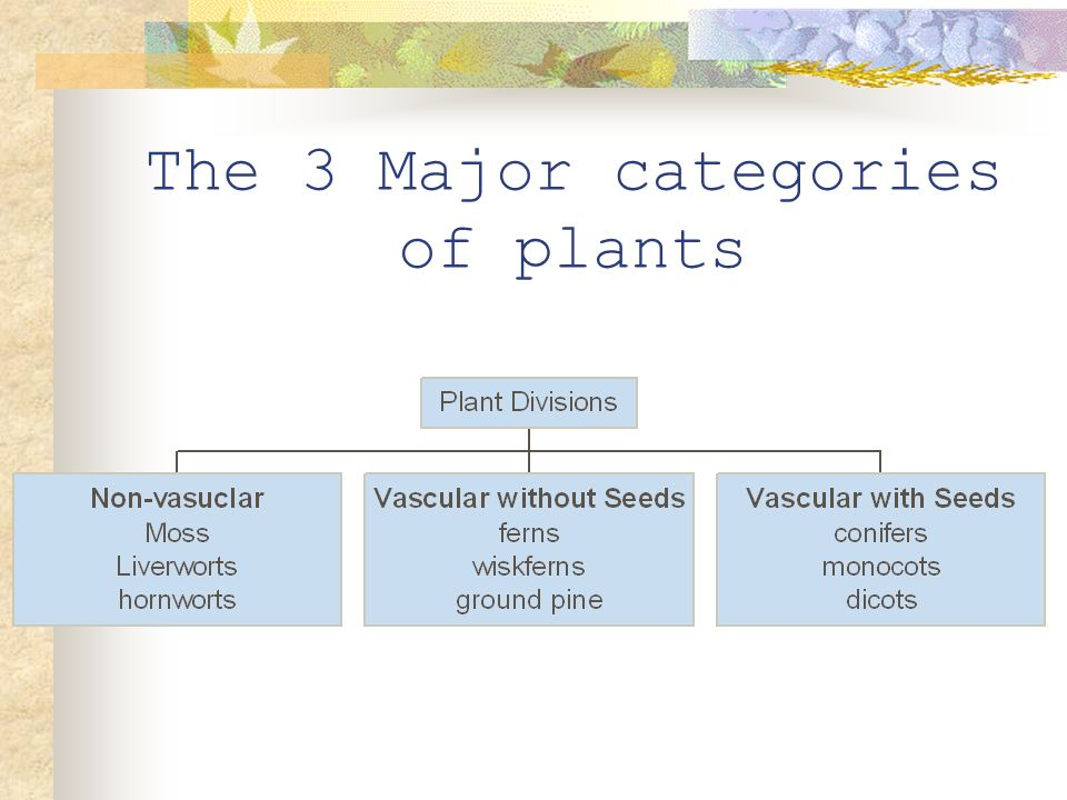The 3 Major categories of plants
