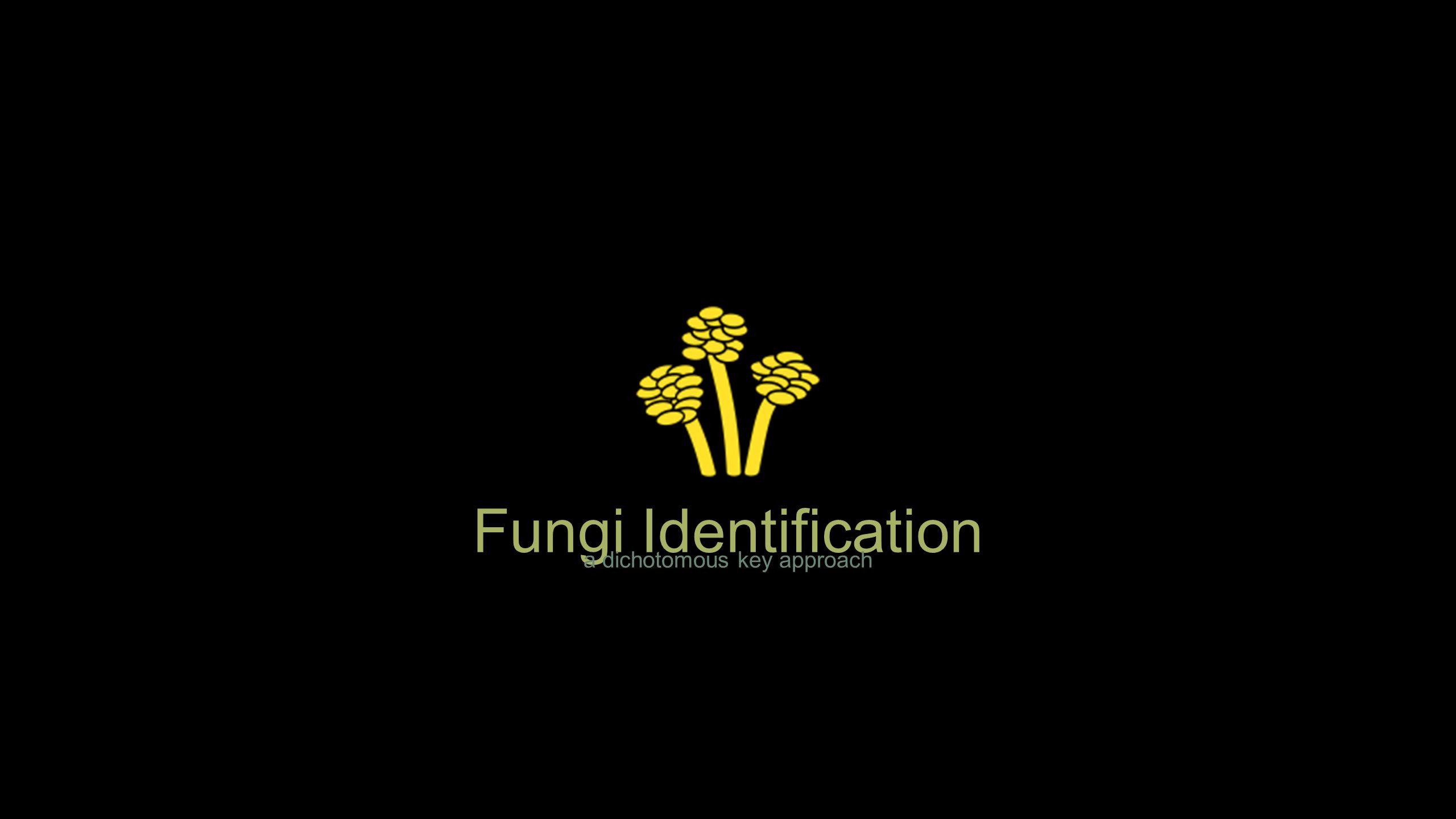 Fungi Identification a dichotomous key approach