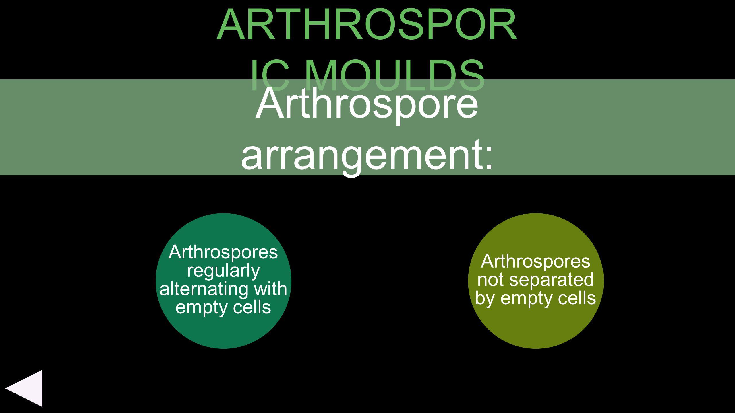 ARTHROSPOR IC MOULDS Arthrospores regularly alternating with empty cells Arthrospores not separated by empty cells Arthrospore arrangement:
