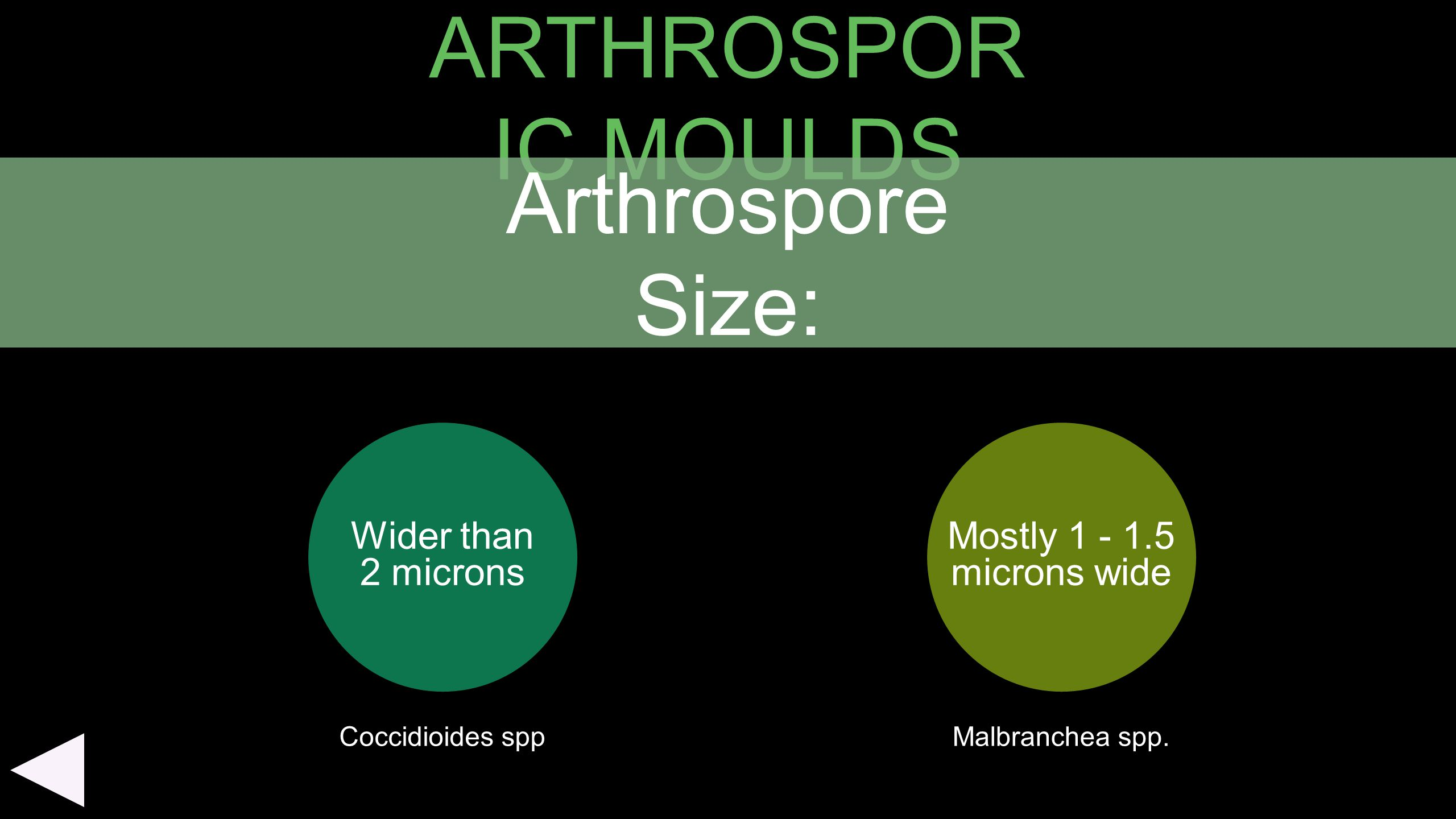 ARTHROSPOR IC MOULDS Wider than 2 microns Mostly 1 - 1.5 microns wide Arthrospore Size: Coccidioides sppMalbranchea spp.