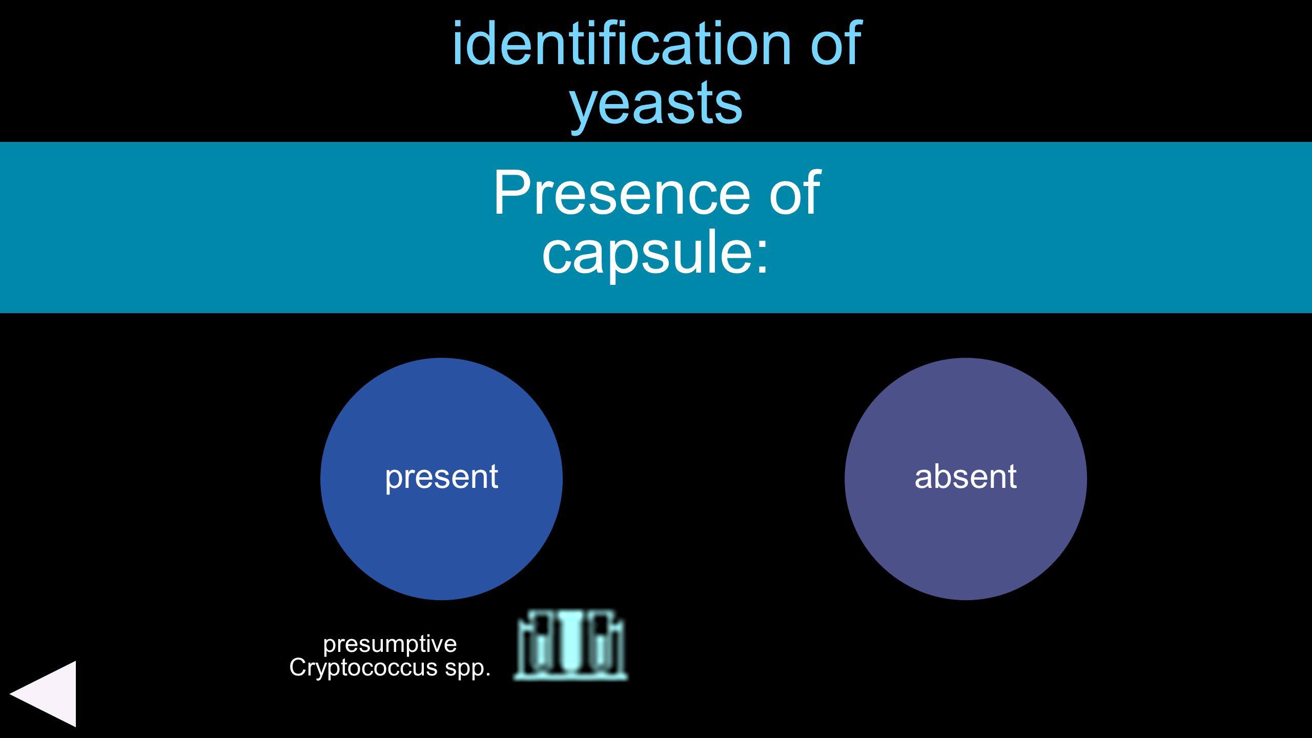 identification of yeasts Presence of capsule: presentabsent presumptive Cryptococcus spp.