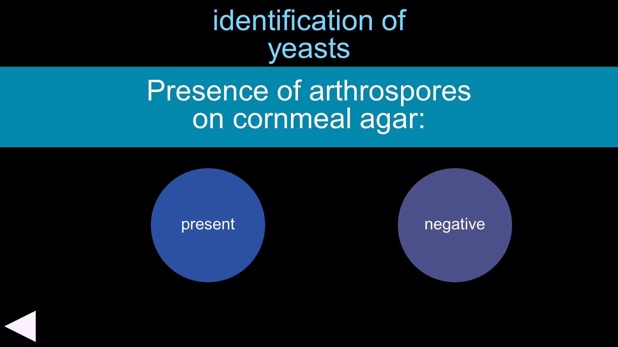 identification of yeasts Presence of arthrospores on cornmeal agar: presentnegative