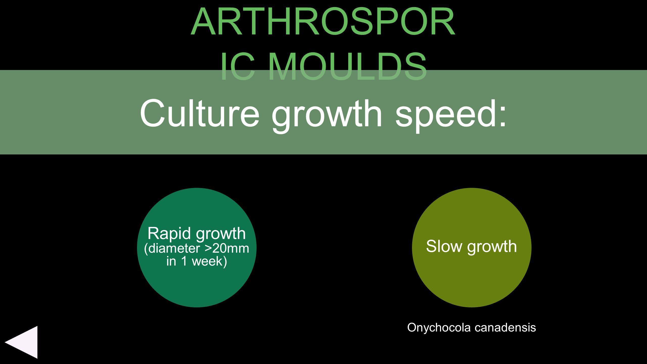 ARTHROSPOR IC MOULDS Rapid growth (diameter >20mm in 1 week) Slow growth Culture growth speed: Onychocola canadensis