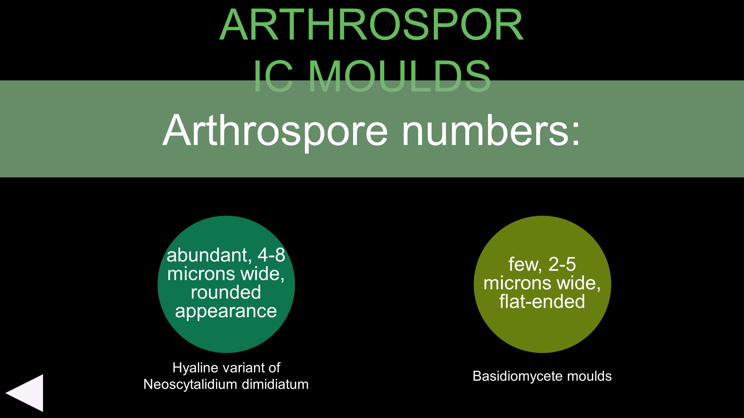 ARTHROSPOR IC MOULDS abundant, 4-8 microns wide, rounded appearance few, 2-5 microns wide, flat-ended Arthrospore numbers: Basidiomycete moulds Hyalin