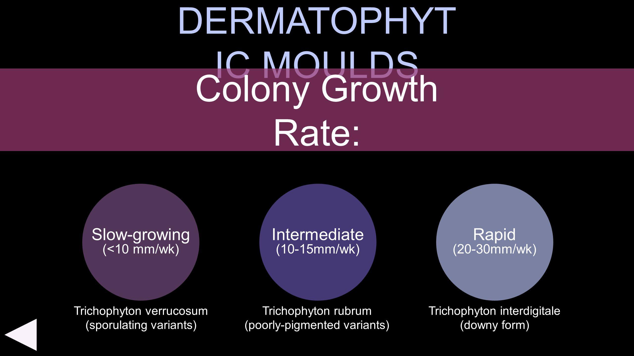 DERMATOPHYT IC MOULDS Slow-growing (<10 mm/wk) Rapid (20-30mm/wk) Colony Growth Rate: Intermediate (10-15mm/wk) Trichophyton verrucosum (sporulating v