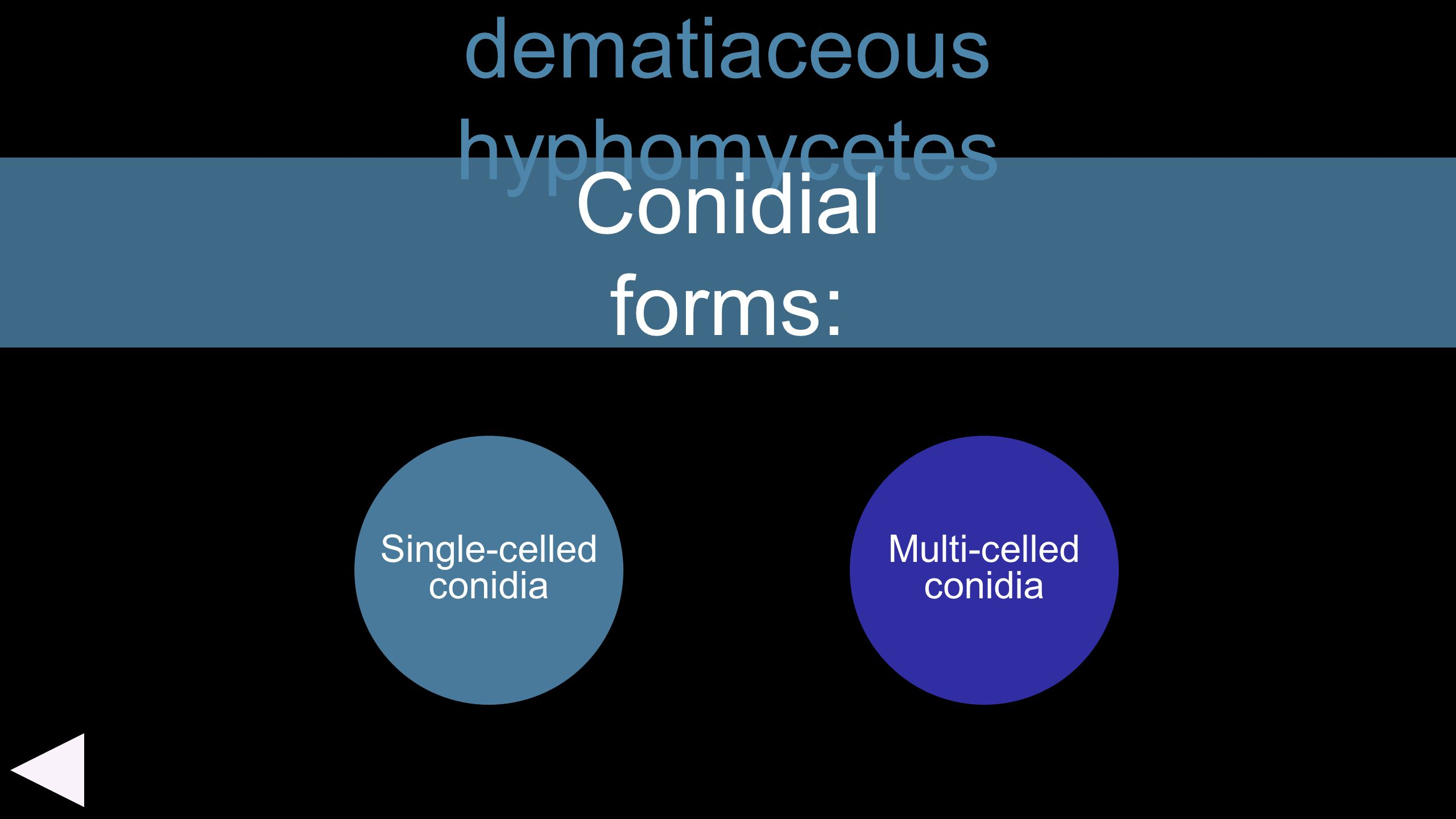 dematiaceous hyphomycetes Single-celled conidia Conidial forms: Multi-celled conidia