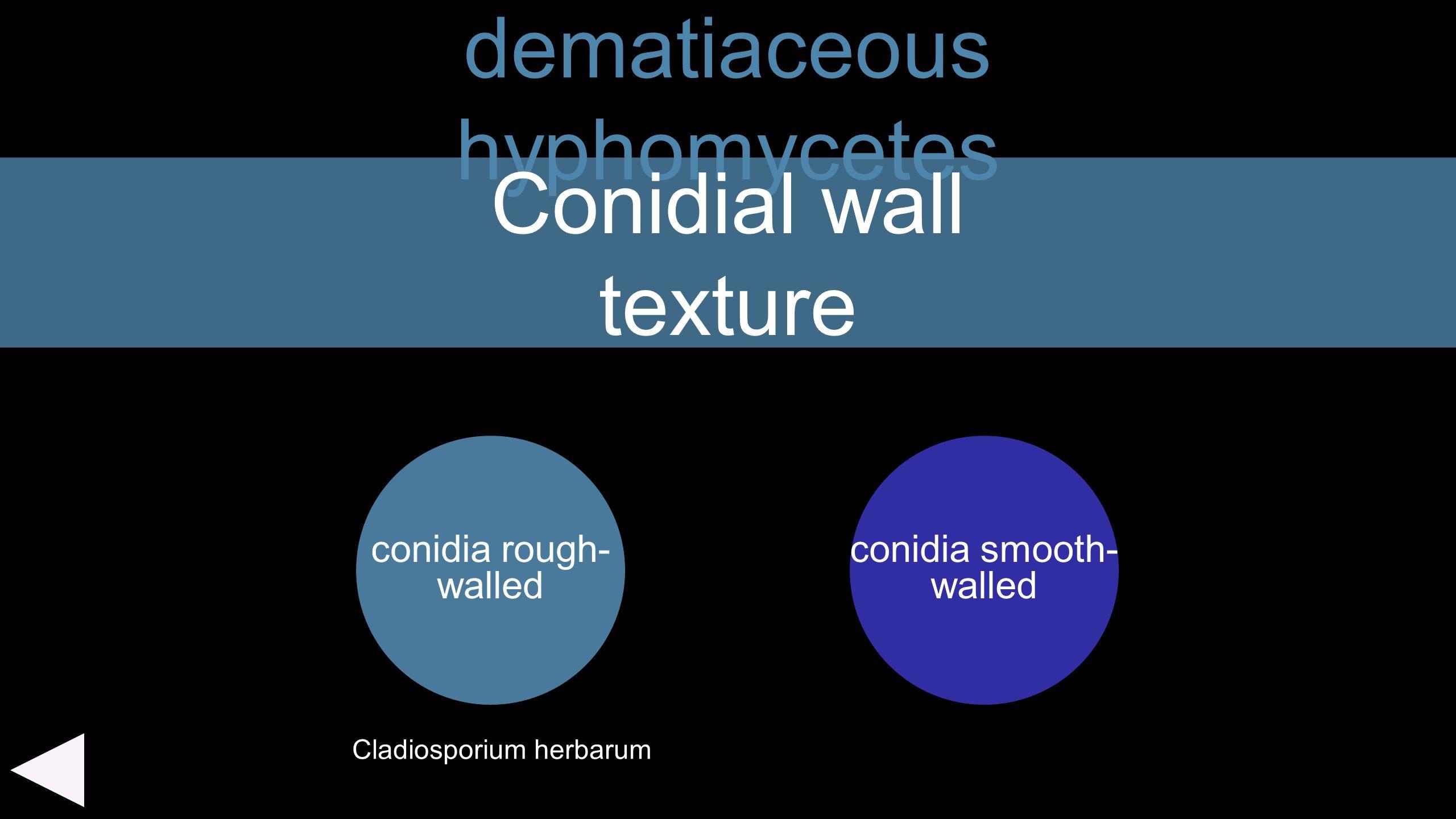 dematiaceous hyphomycetes conidia rough- walled Conidial wall texture conidia smooth- walled Cladiosporium herbarum
