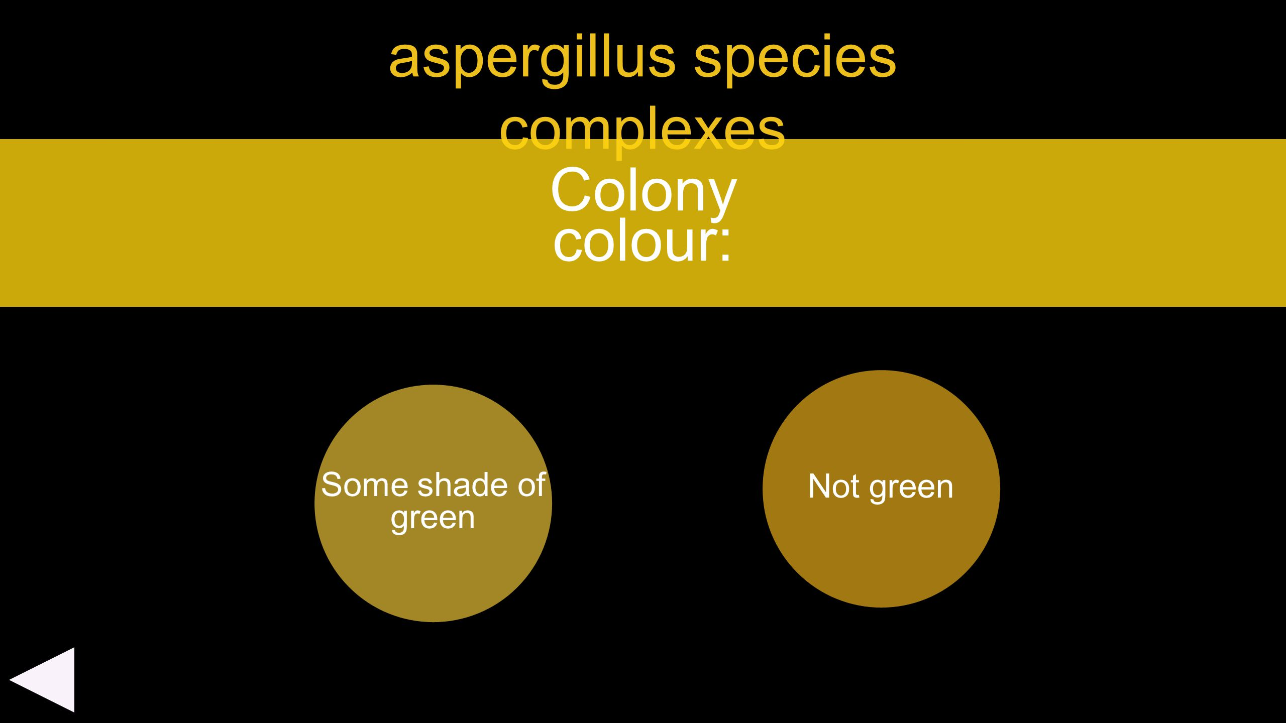 aspergillus species complexes Some shade of green Colony colour: Not green