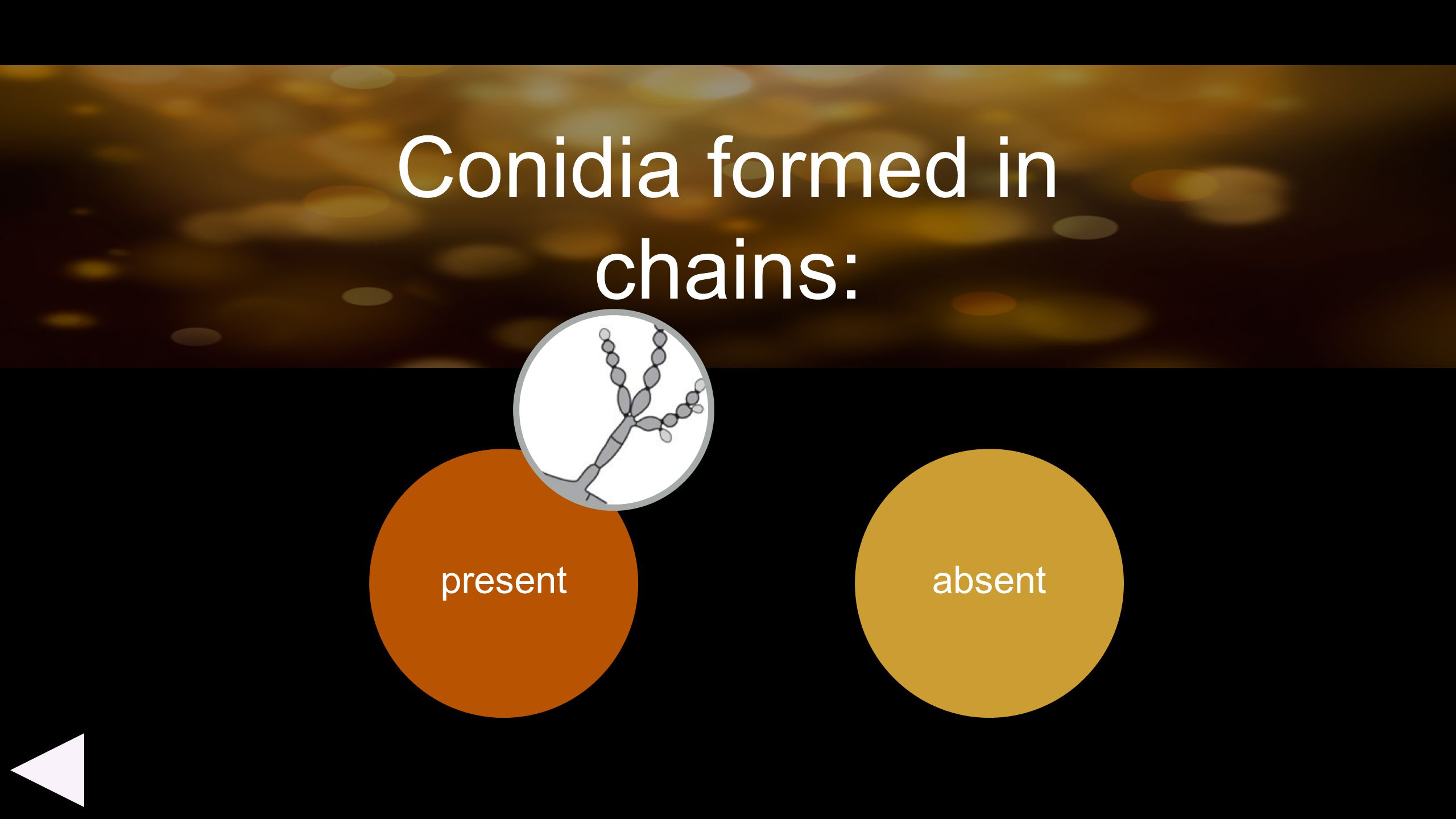 present absent Conidia formed in chains: