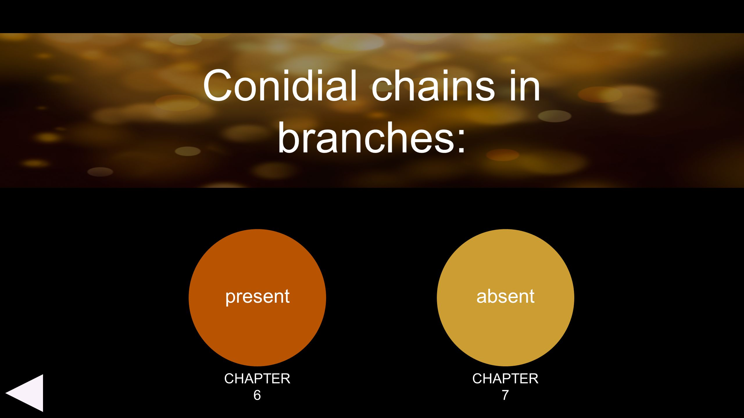 present absent Conidial chains in branches: CHAPTER 6 CHAPTER 7