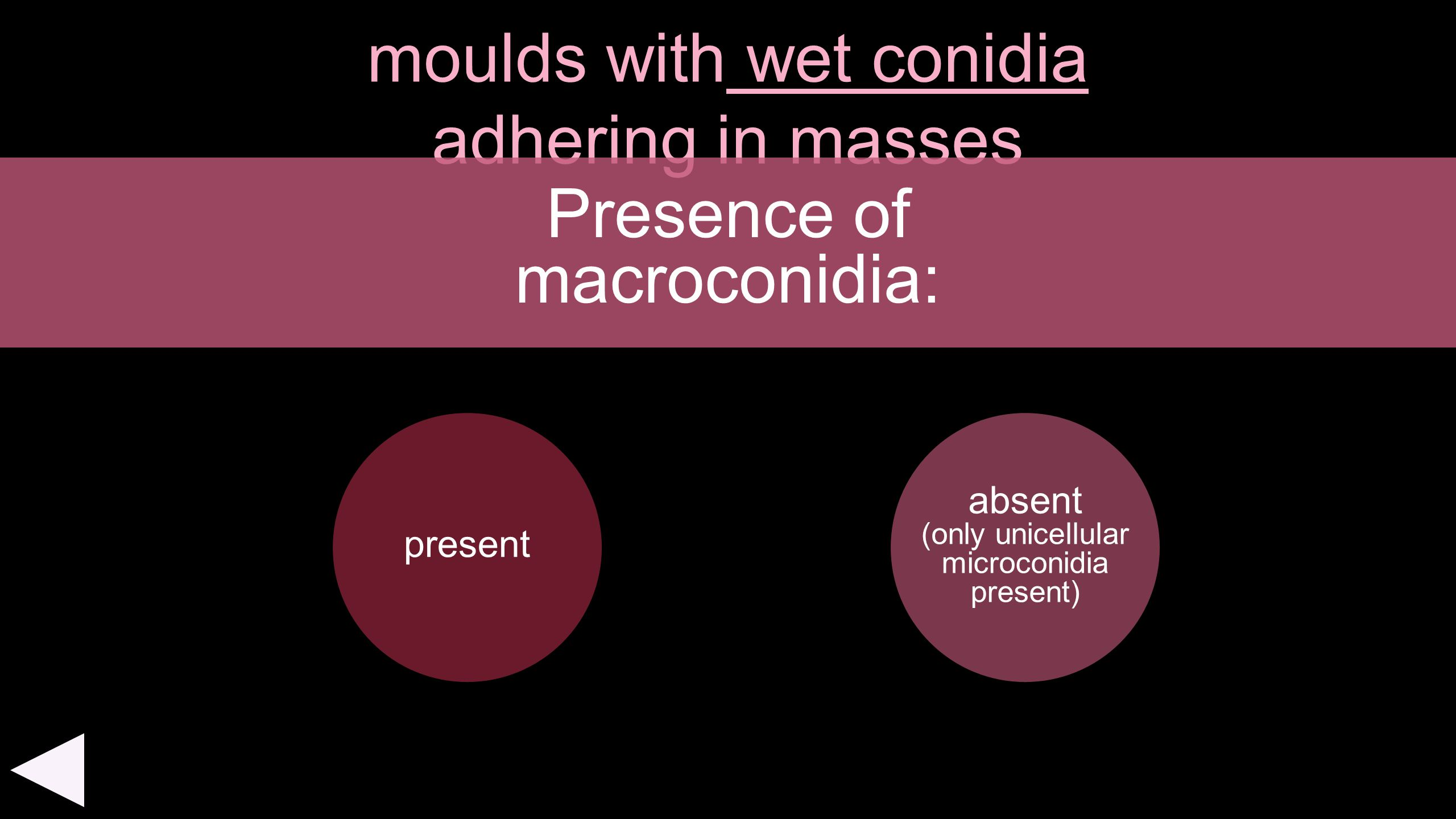 moulds with wet conidia adhering in masses present Presence of macroconidia: absent (only unicellular microconidia present)