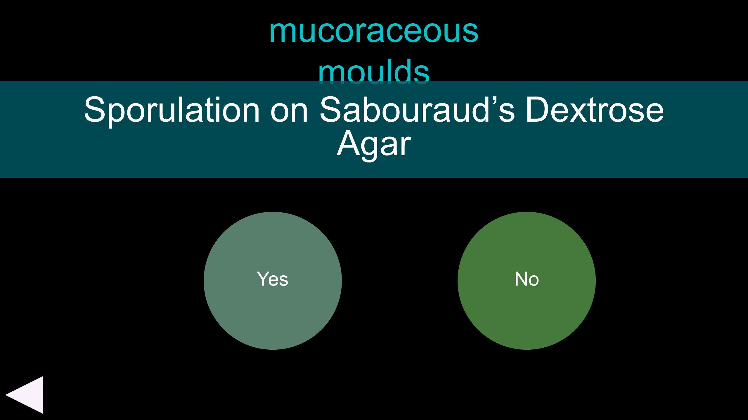 mucoraceous moulds Yes Sporulation on Sabouraud's Dextrose Agar No