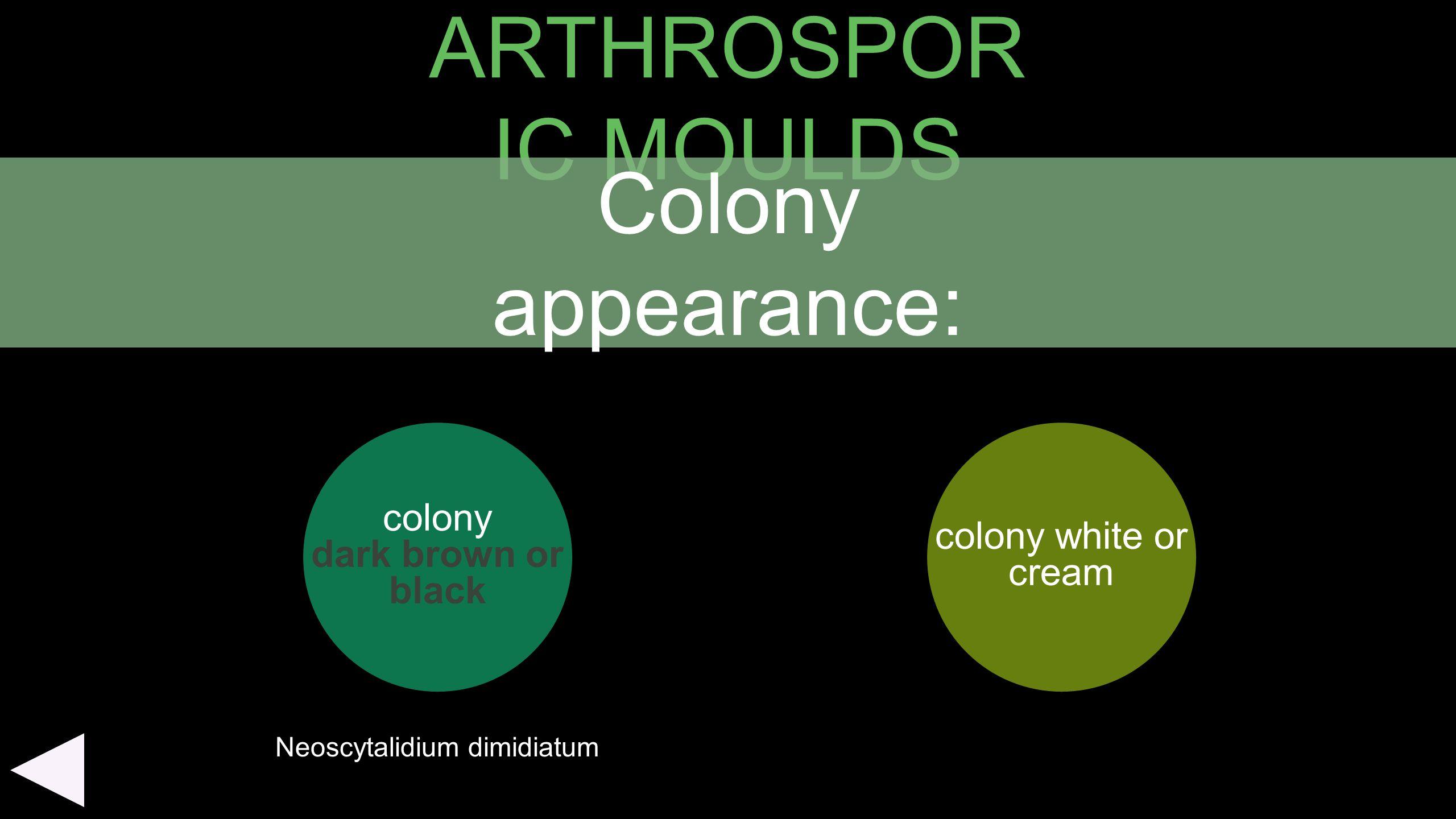 ARTHROSPOR IC MOULDS colony dark brown or black colony white or cream Colony appearance: Neoscytalidium dimidiatum