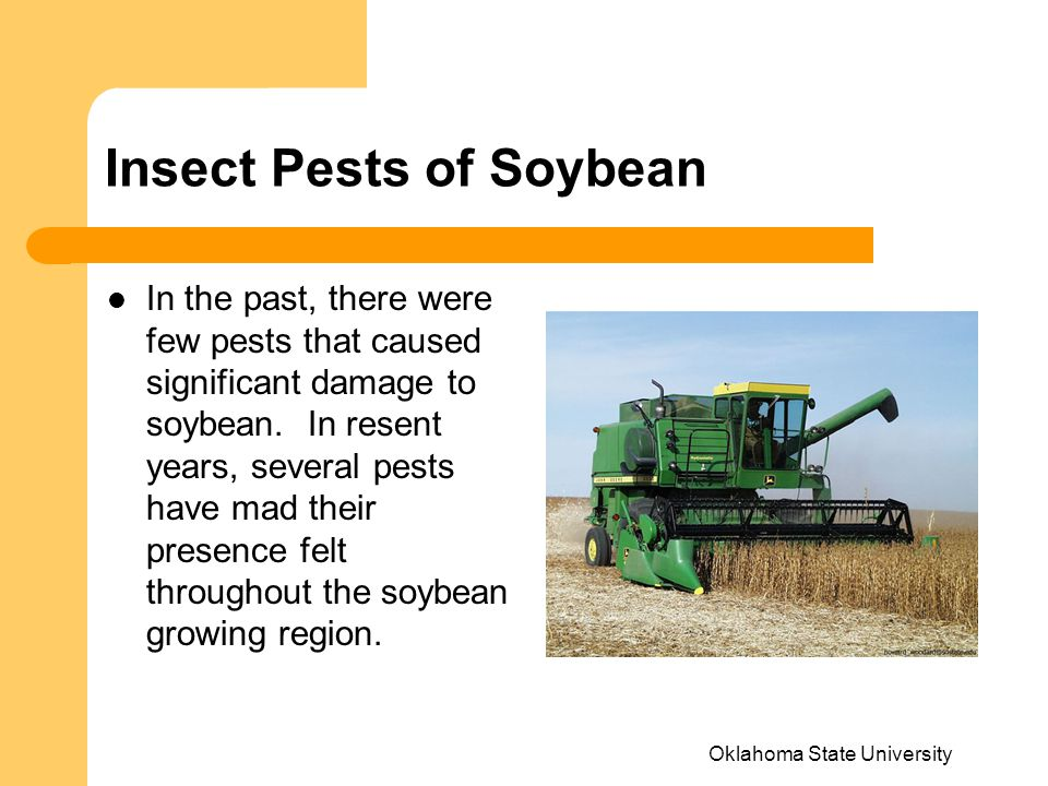 Oklahoma State University Insect Pests of Soybean In the past, there were few pests that caused significant damage to soybean.