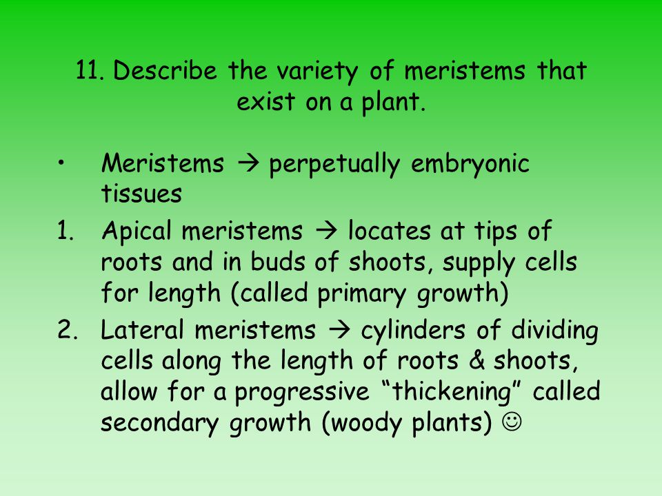 11.Describe the variety of meristems that exist on a plant.