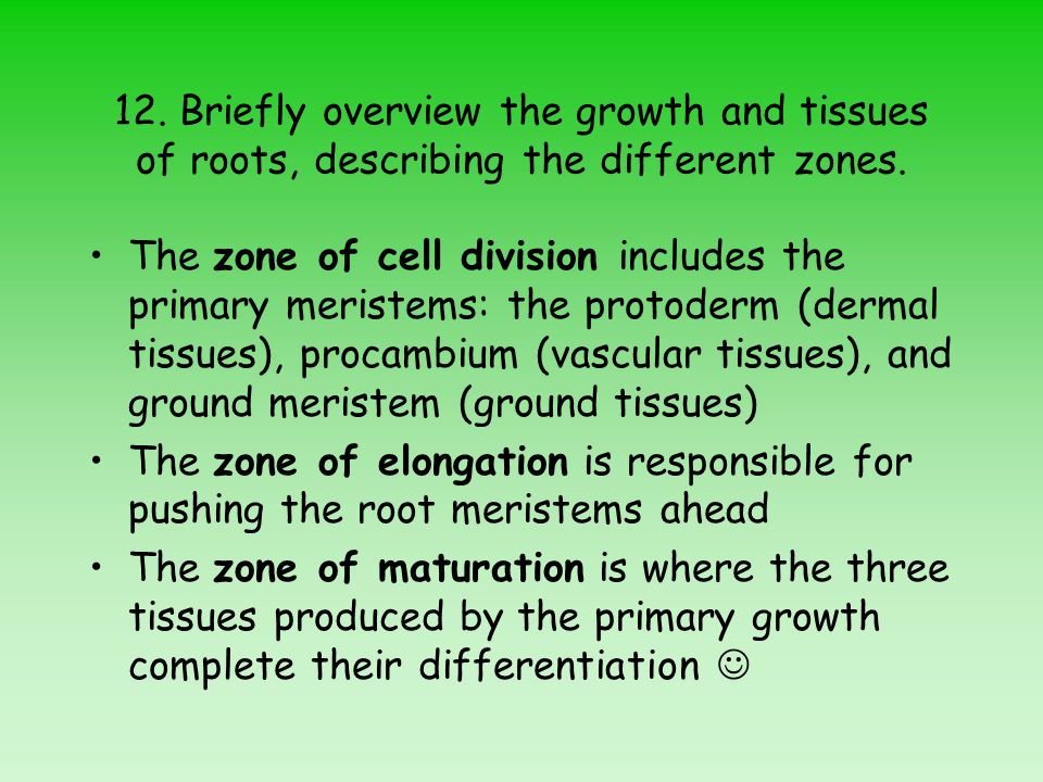 12.Briefly overview the growth and tissues of roots, describing the different zones.