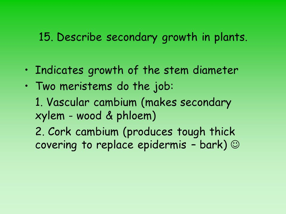 15.Describe secondary growth in plants.