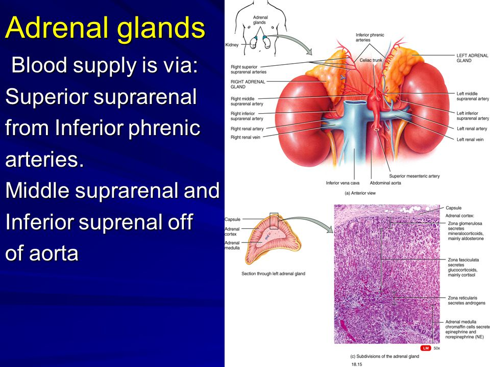 Adrenal glands Blood supply is via: Blood supply is via: Superior suprarenal from Inferior phrenic arteries. Middle suprarenal and Inferior suprenal o