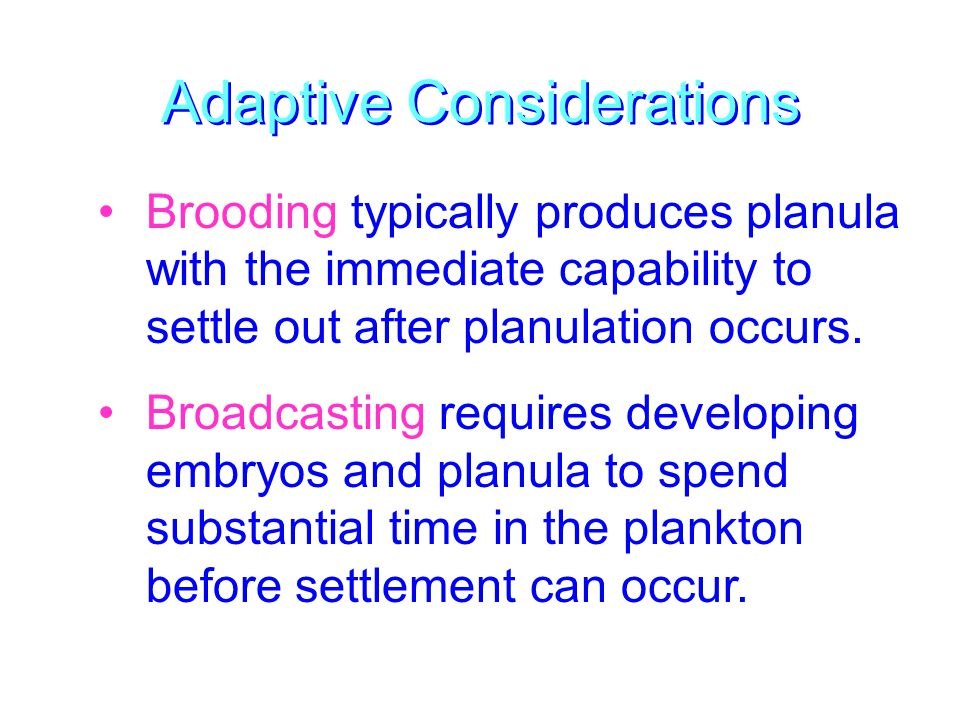 Adaptive Considerations Brooding typically produces planula with the immediate capability to settle out after planulation occurs.