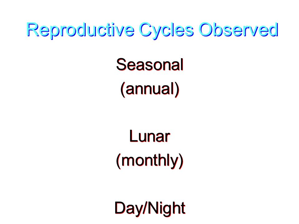Reproductive Cycles Observed Seasonal (annual) Lunar (monthly) Day/Night Seasonal (annual) Lunar (monthly) Day/Night