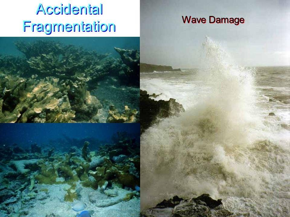 Accidental Fragmentation Wave Damage