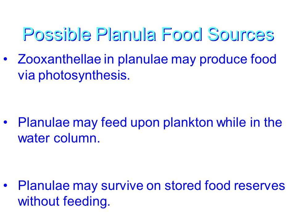 Possible Planula Food Sources Zooxanthellae in planulae may produce food via photosynthesis. Planulae may feed upon plankton while in the water column