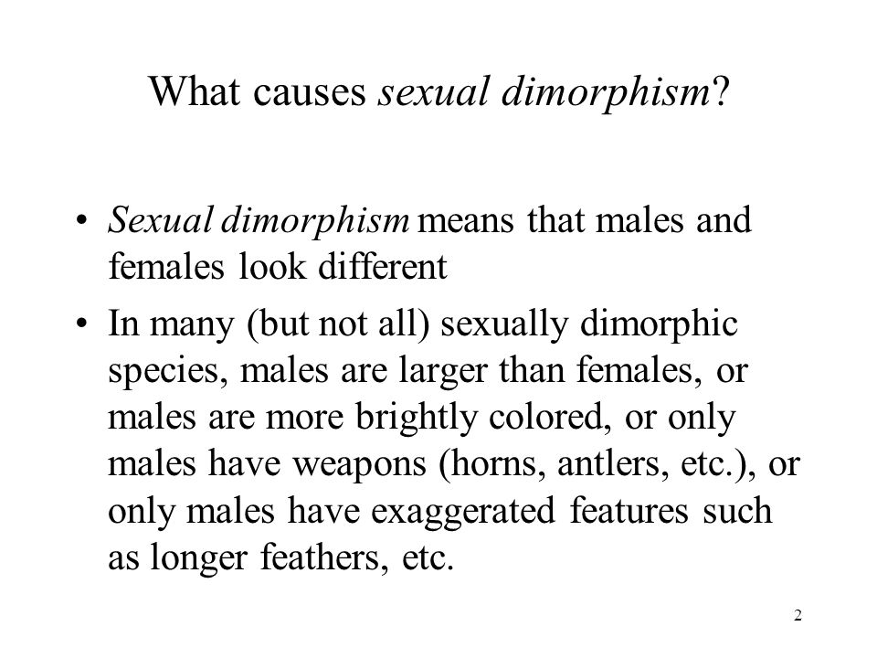 2 What causes sexual dimorphism? Sexual dimorphism means that males and females look different In many (but not all) sexually dimorphic species, males