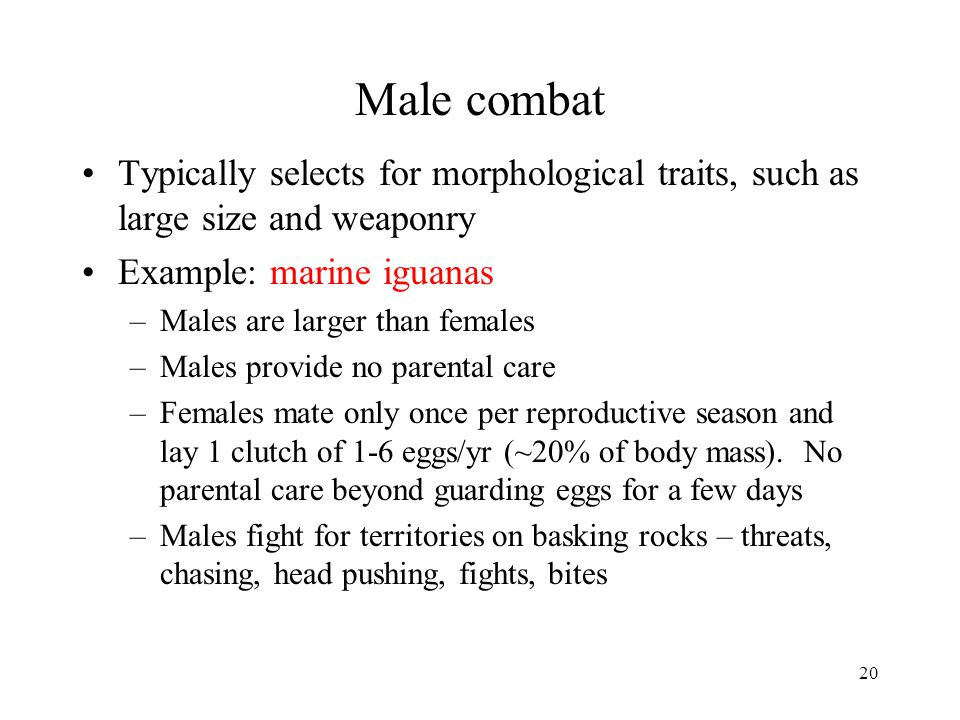 20 Male combat Typically selects for morphological traits, such as large size and weaponry Example: marine iguanas –Males are larger than females –Mal