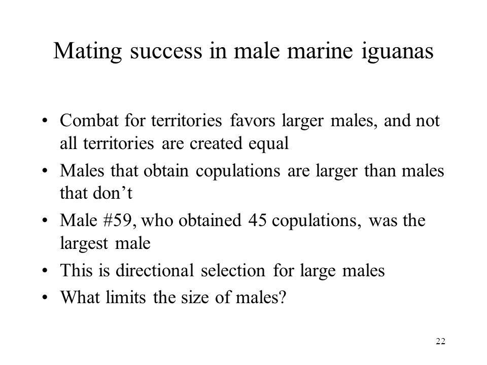 22 Mating success in male marine iguanas Combat for territories favors larger males, and not all territories are created equal Males that obtain copul