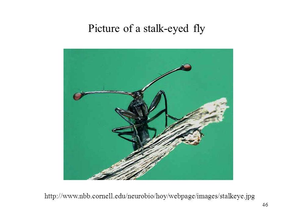 46 Picture of a stalk-eyed fly http://www.nbb.cornell.edu/neurobio/hoy/webpage/images/stalkeye.jpg