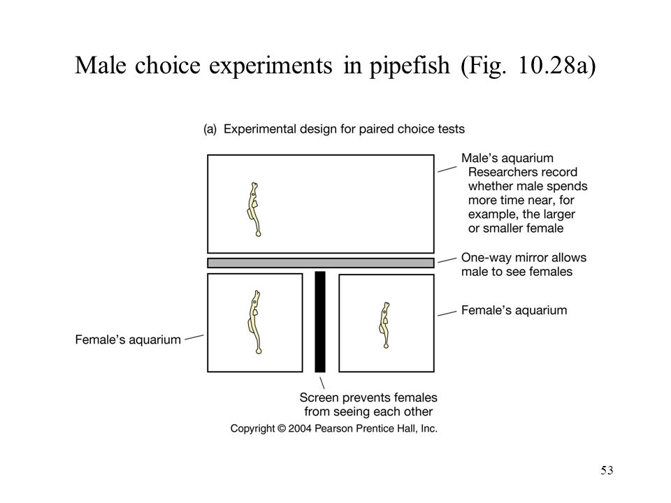 53 Male choice experiments in pipefish (Fig. 10.28a)