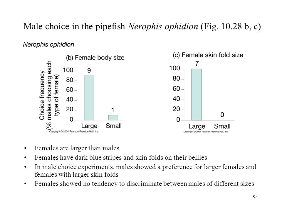 54 Male choice in the pipefish Nerophis ophidion (Fig. 10.28 b, c) Females are larger than males Females have dark blue stripes and skin folds on thei