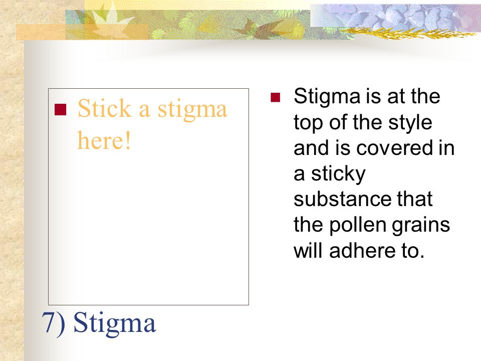7) Stigma Stick a stigma here! Stigma is at the top of the style and is covered in a sticky substance that the pollen grains will adhere to.