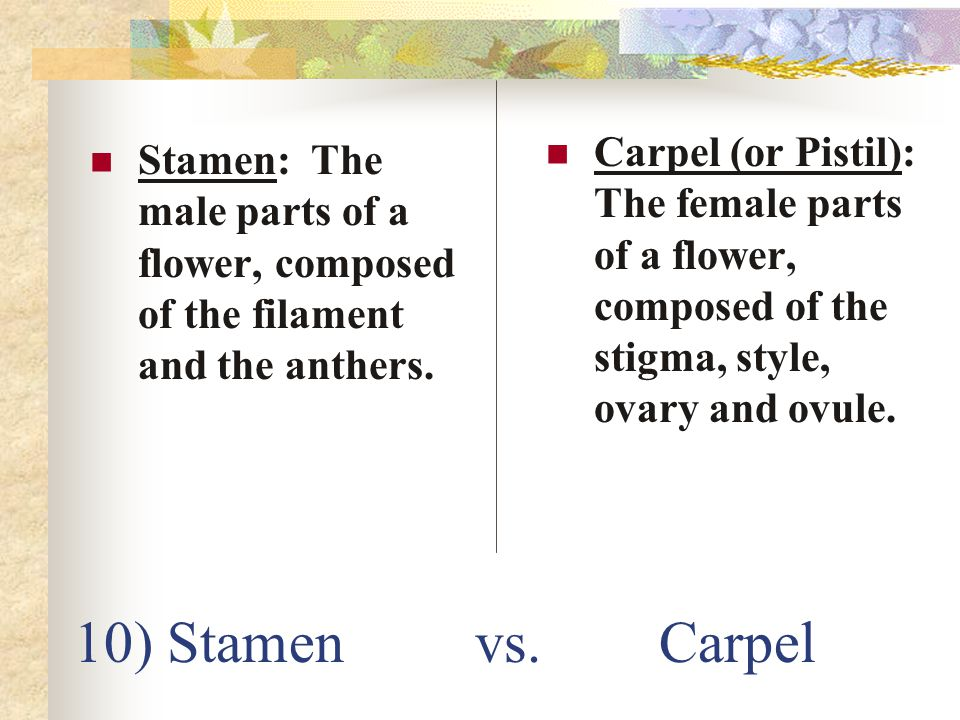 10) Stamen vs. Carpel Stamen: The male parts of a flower, composed of the filament and the anthers. Carpel (or Pistil): The female parts of a flower,