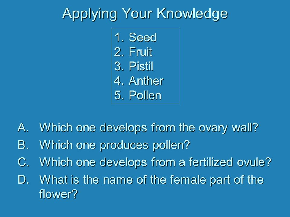 Applying Your Knowledge A.Which one develops from the ovary wall.