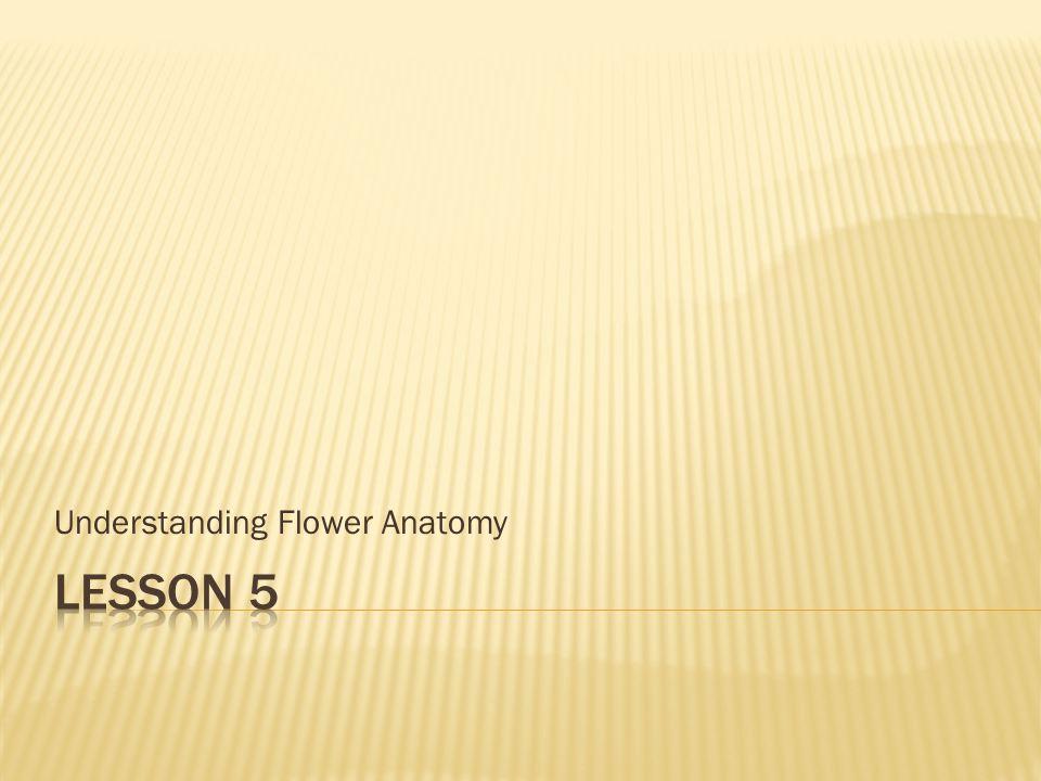 Understanding Flower Anatomy