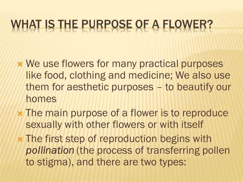  We use flowers for many practical purposes like food, clothing and medicine; We also use them for aesthetic purposes – to beautify our homes  The m