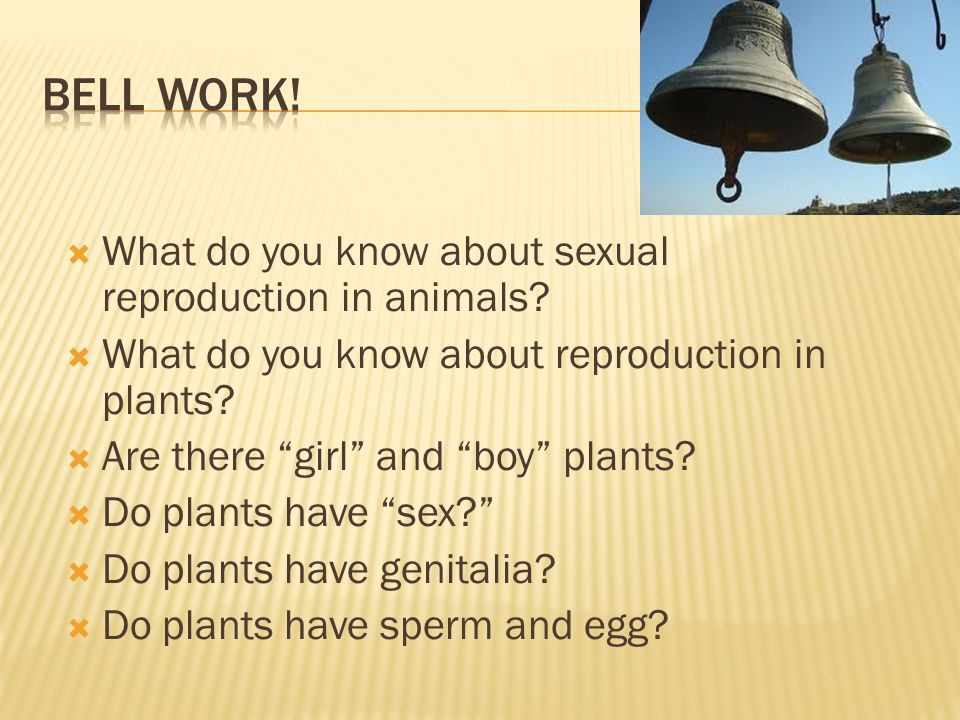 """ What do you know about sexual reproduction in animals?  What do you know about reproduction in plants?  Are there """"girl"""" and """"boy"""" plants?  Do pl"""