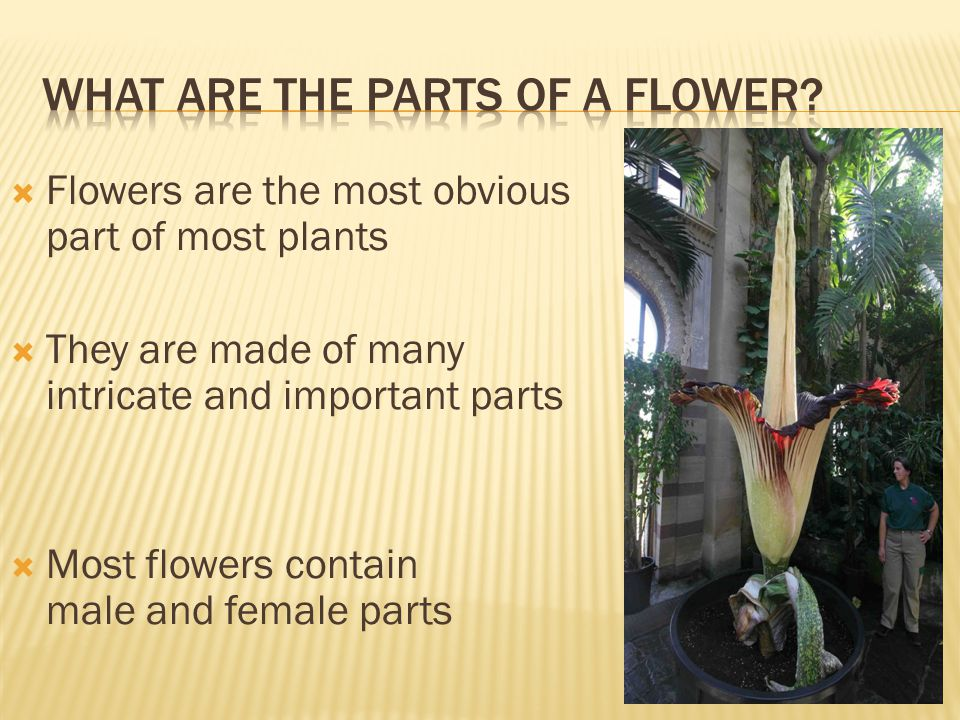  A good way to tell the difference between a monocot and a dicot is to look closely at the flowers  Monocots have flower parts in multiples of 3 (3,6,9,12)  Dicots have flower parts in multiples of 4 or 5 (4,12,16 or 5,10,15)