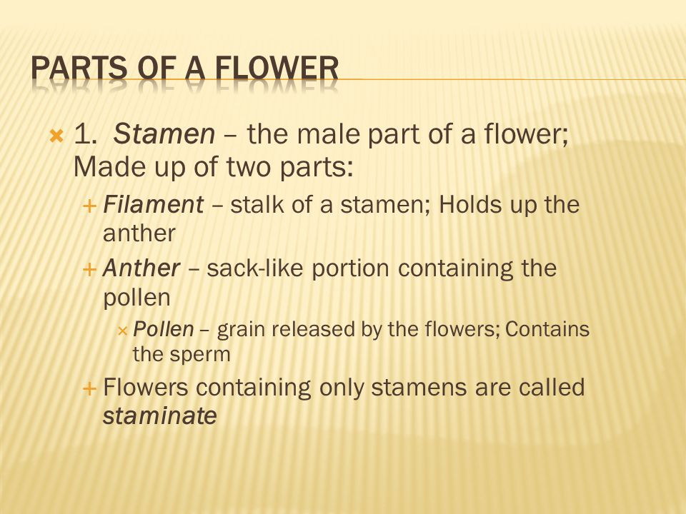  What is the male part of a flower called.