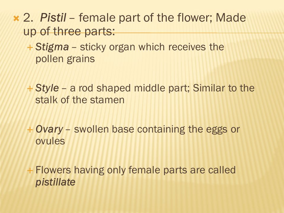  2. Pistil – female part of the flower; Made up of three parts:  Stigma – sticky organ which receives the pollen grains  Style – a rod shaped middl